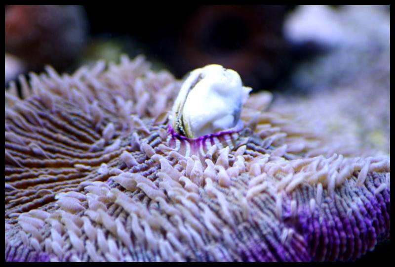 photos de poissons et coraux  - Page 7 Edu37_10