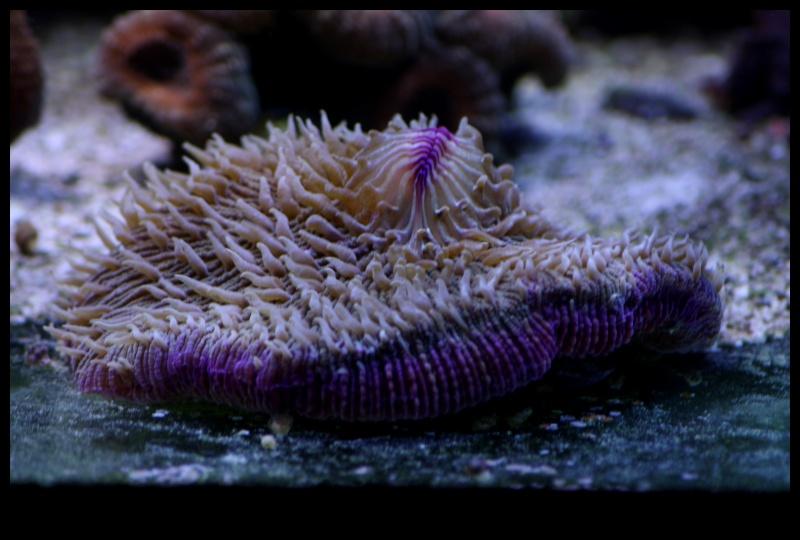 photos de poissons et coraux  - Page 7 Edu37_11