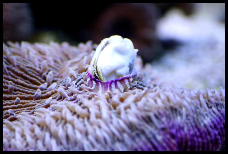 photos de poissons et coraux  - Page 7 Edu37_12