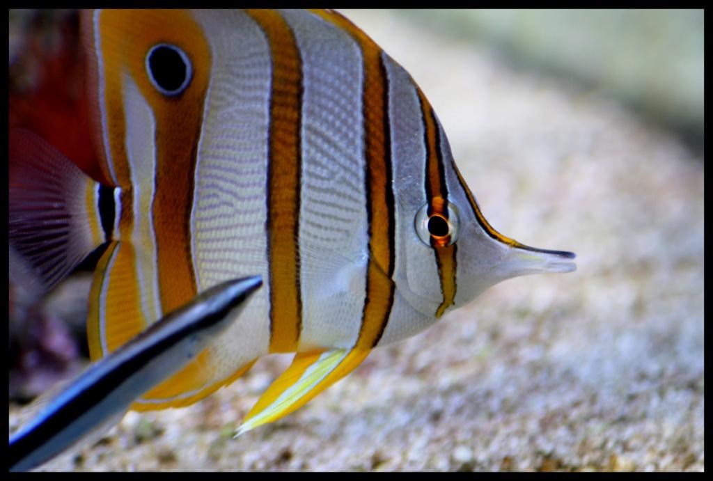photos de poissons et coraux  Ffffff11