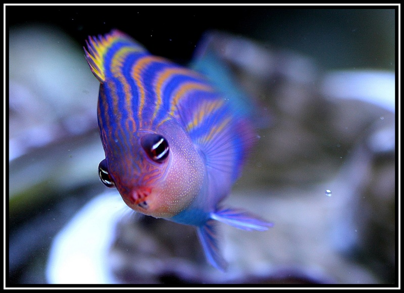 photos de poissons et coraux  Hier_010