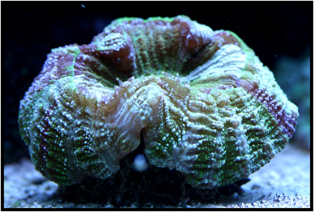 photos de poissons et coraux  - Page 7 Hier_015