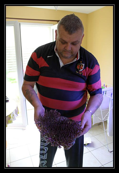 photos de poissons et coraux  - Page 6 Img51110