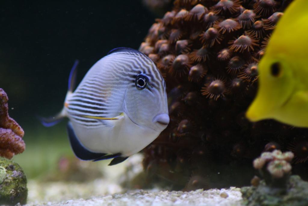 photos de poissons et coraux  Img_5810
