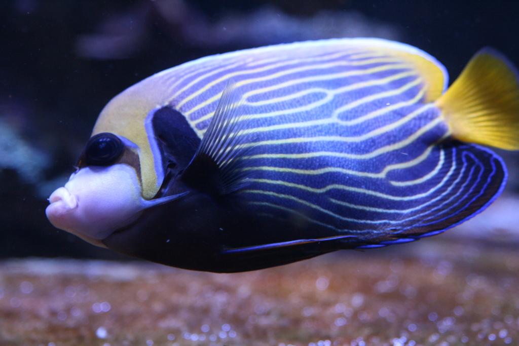 photos de poissons et coraux  - Page 5 Img_5811