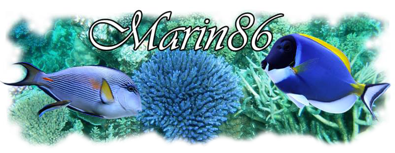 red sea max 130 de nono49 - Page 8 Marin811