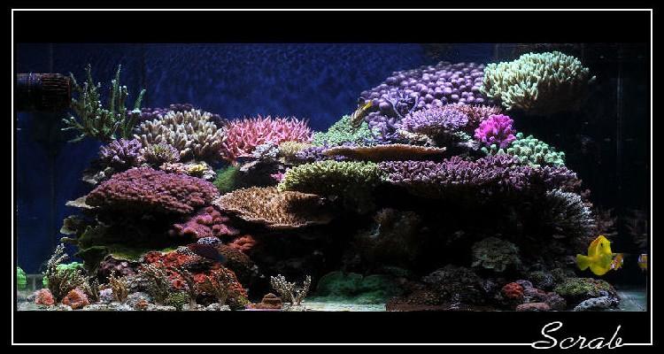 Marin86 : forum des aquariophiles d'eau de mer Nico_414