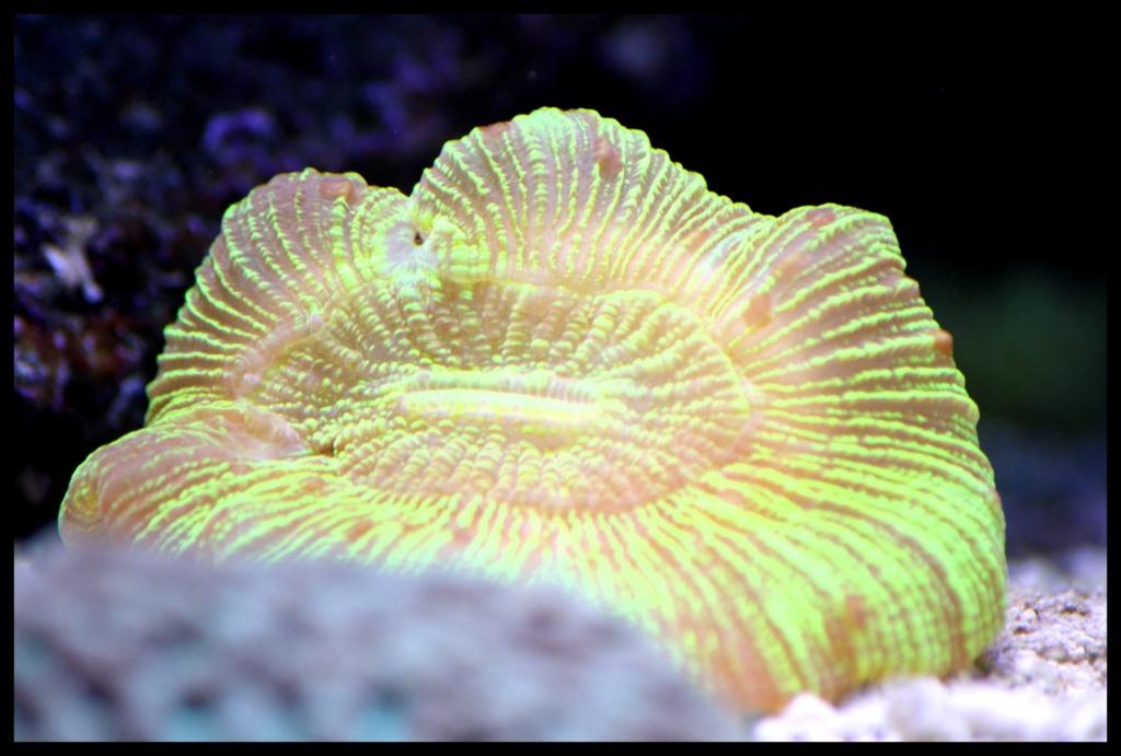photos de poissons et coraux  - Page 4 Novemb10