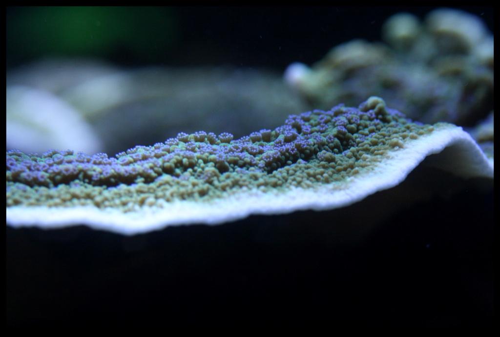 photos de poissons et coraux  - Page 5 Novemb11