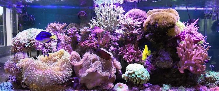 Marin86 : forum des aquariophiles d'eau de mer Olivie14