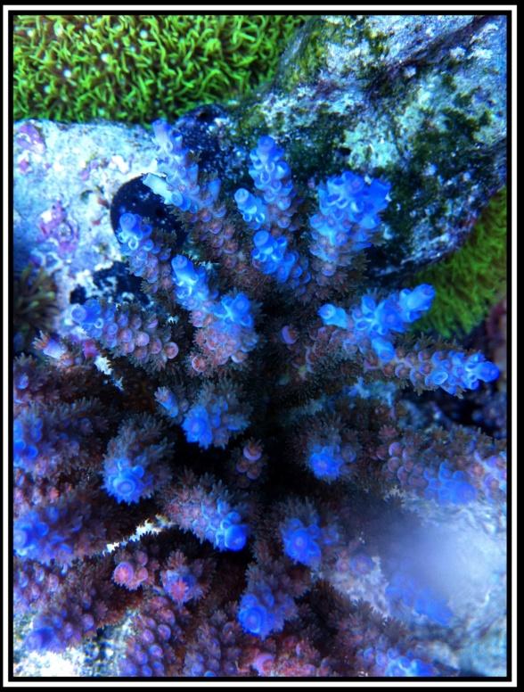 photos de poissons et coraux  - Page 4 Photo_20