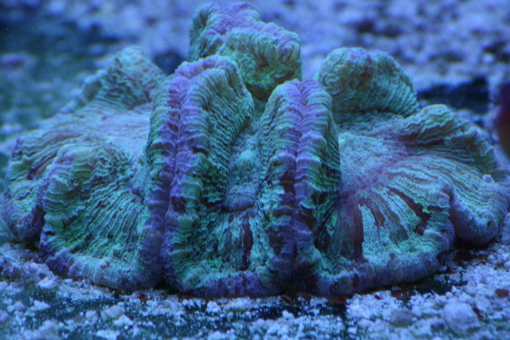 photos de poissons et coraux  - Page 3 Photos11