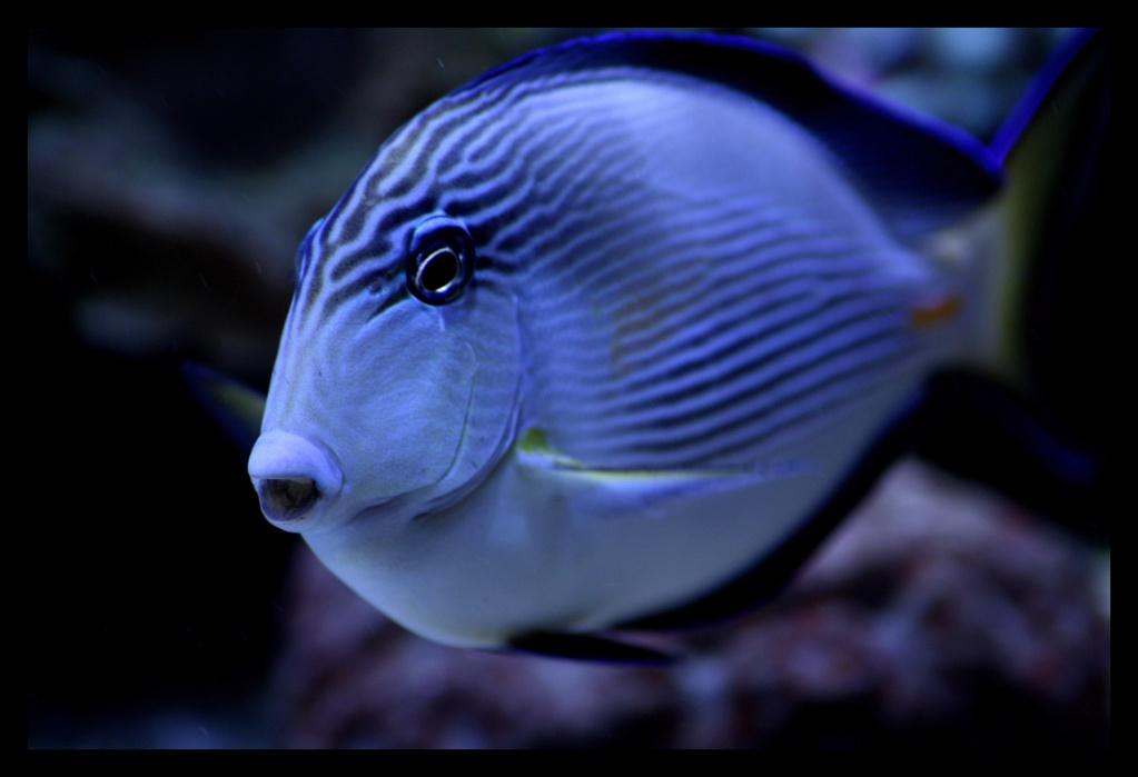 photos de poissons et coraux  Poisso10