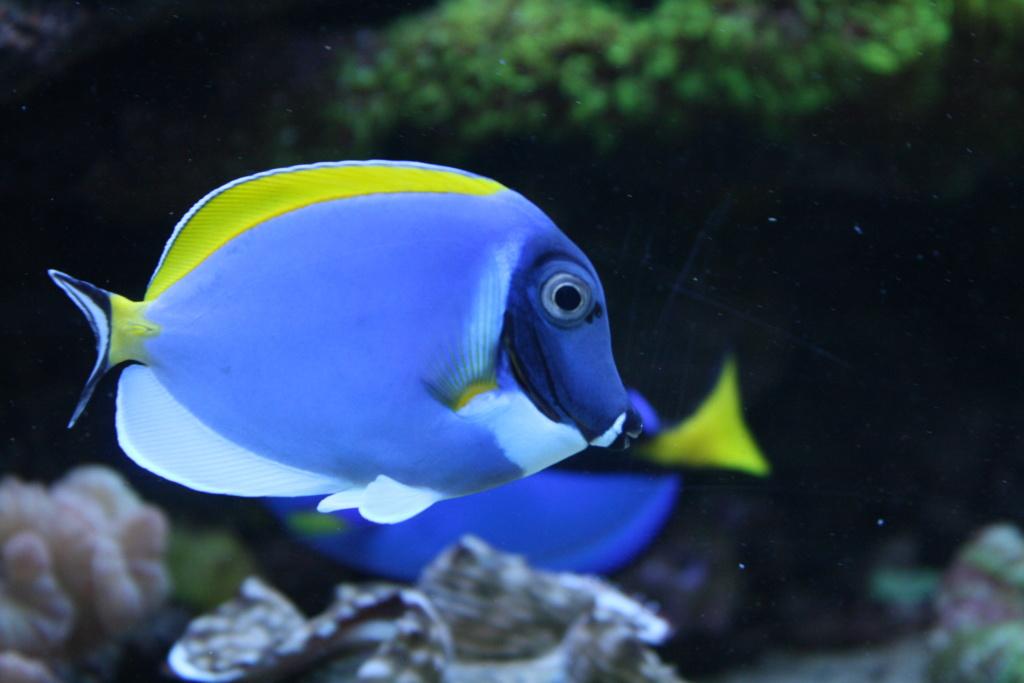photos de poissons et coraux  - Page 3 Poisso12