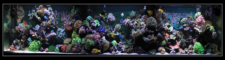 Marin86 : forum des aquariophiles d'eau de mer Sam_6110