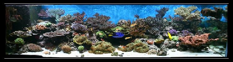 Marin86 : forum des aquariophiles d'eau de mer Seb_7110