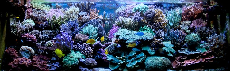 Marin86 : forum des aquariophiles d'eau de mer Stepha14