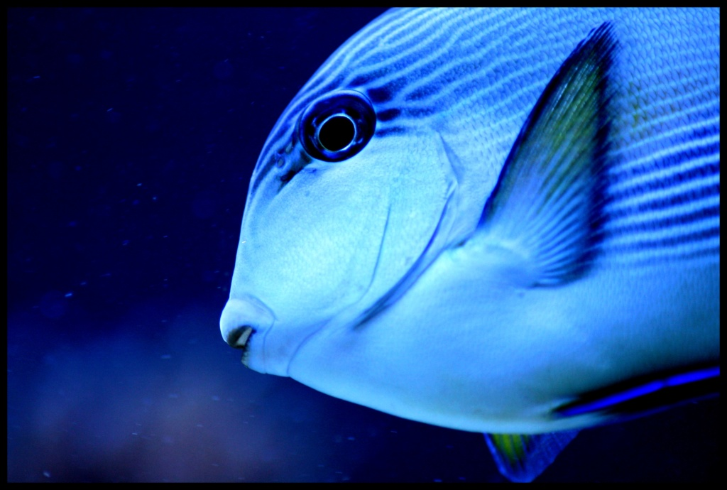 photos de poissons et coraux  Zzzzzz10