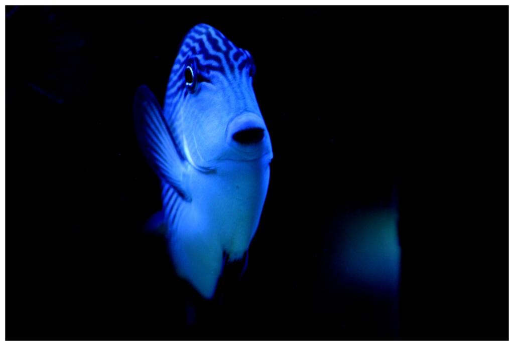 photos de poissons et coraux  - Page 4 Zzzzzz11