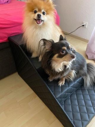 Hunde und Katzentreppen - hundetreppen 10273610