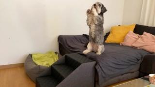 Hunde und Katzentreppen - hundetreppen 10607210