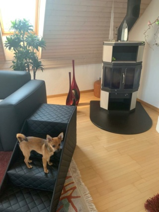 Hunde und Katzentreppen - hundetreppen 10aa3f10