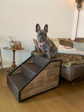 Hunde und Katzentreppen - hundetreppen 10f36910
