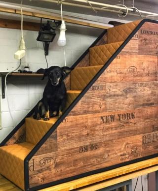 Hunde und Katzentreppen - hundetreppen 12159410