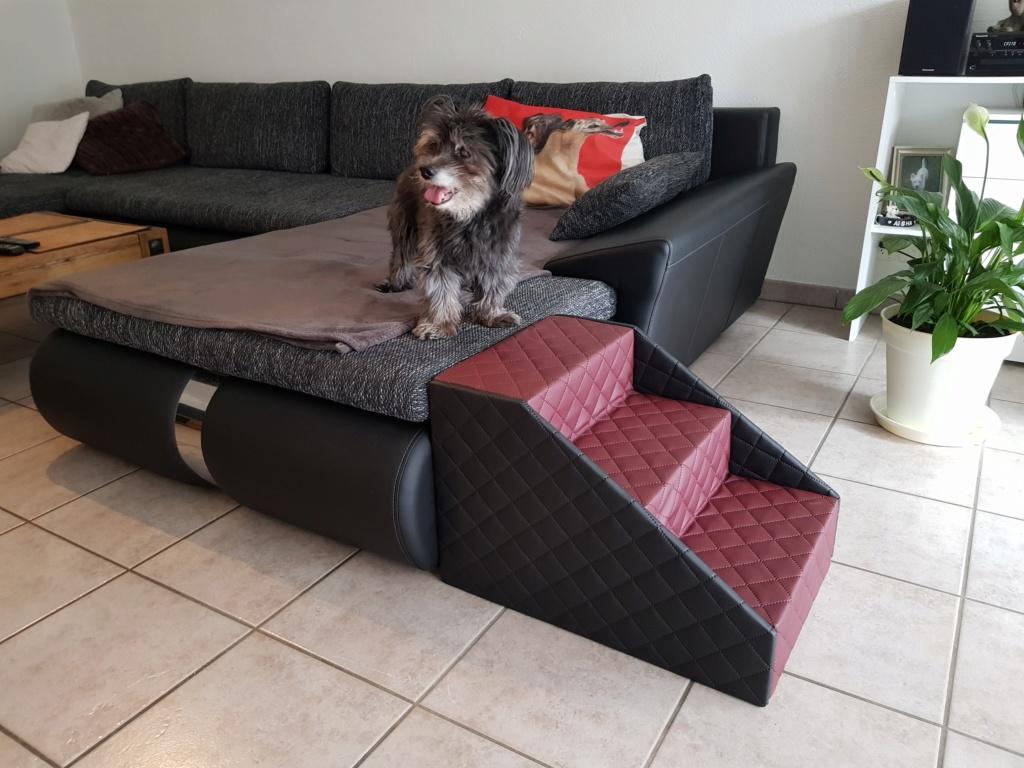 Hunde und Katzentreppen - hundetreppen 20191110