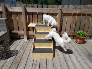 Hunde und Katzentreppen - hundetreppen 20200613