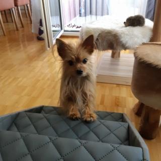 Hunde und Katzentreppen - hundetreppen 21870710