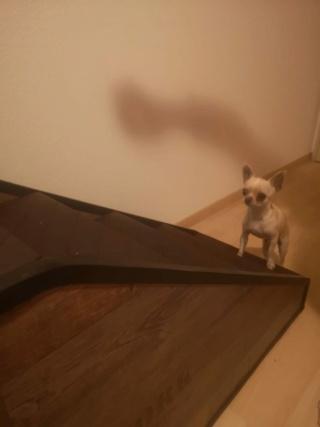 Hunde und Katzentreppen - hundetreppen 52416310