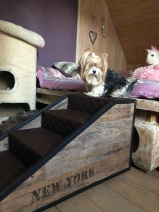 Hunde und Katzentreppen - hundetreppen 86697511
