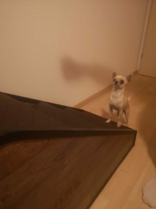 Hunde und Katzentreppen - hundetreppen 8f11a310