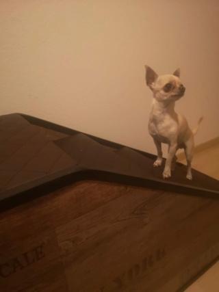 Hunde und Katzentreppen - hundetreppen Efa20810
