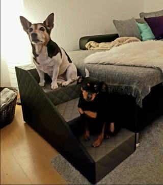 Hunde und Katzentreppen - hundetreppen Unbena14
