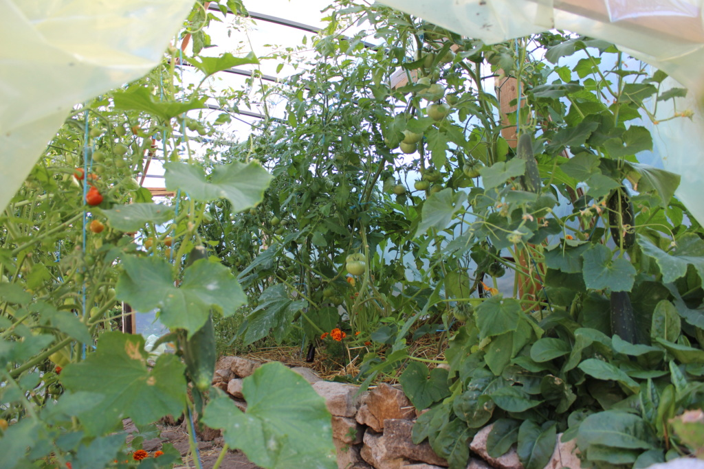 La serre aux Tomates Img_4314