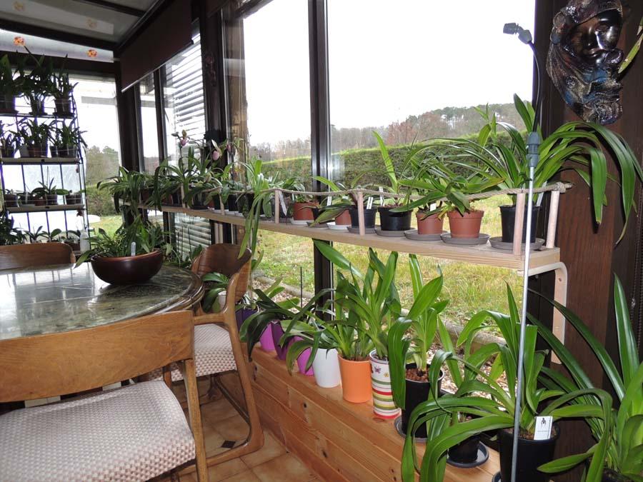 phalaenopsis Dscn5011