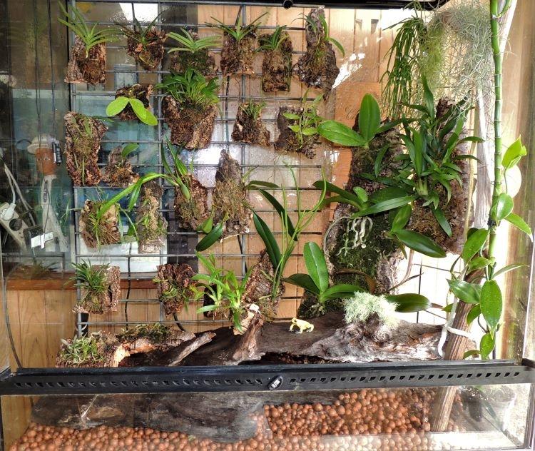 Mes orchidariums Orchid13