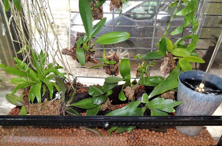 Mes orchidariums Orchid14
