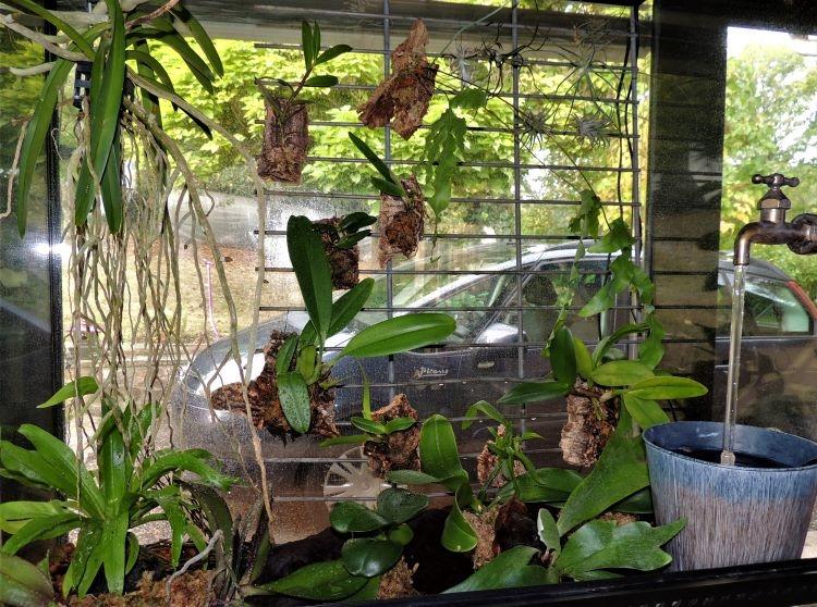Mes orchidariums Orchid15