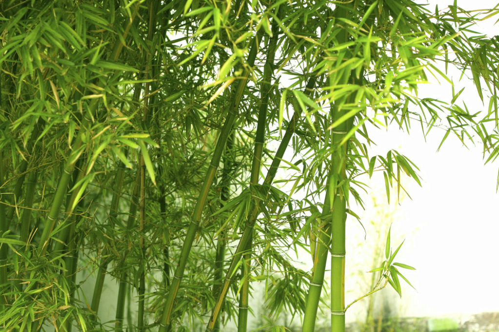 Creme al bambù Beauti10
