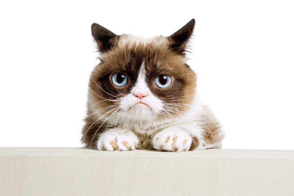 13 faits amusants sur les chats 2-chat10