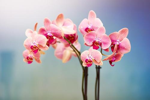 Avez-vous des orchidées à la maison ? Si oui, vous devez essayer cette astuce dès que possible 5f7f8c10