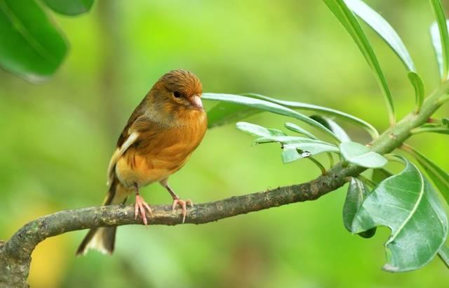 Indre : Plus de 60 oiseaux volés, dont des espèces protégées, retrouvés dans une cabane de chantier 640x1053