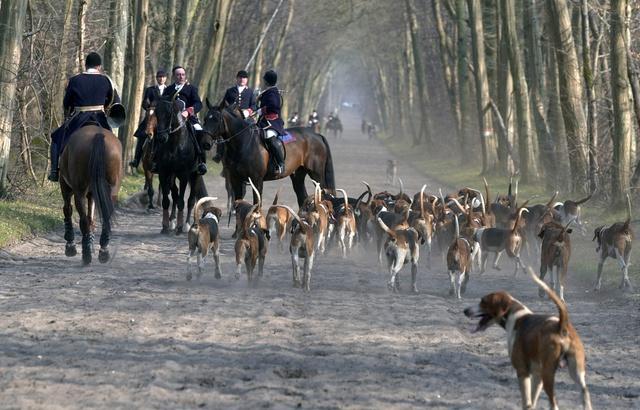 Vendée: Cinq chiens meurent lors d'une partie de chasse à courre 640x4203