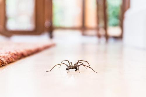 Voici pourquoi tu ne devrais jamais tuer des araignées dans ta maison 70bc4310