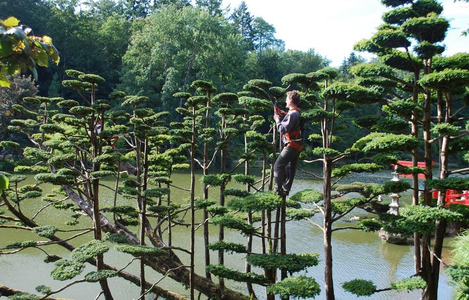 A une heure de Nantes, le plus grand jardin japonais d'Europe 960x6331