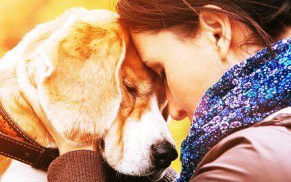 Les raisons qui nous poussent à aimer un animal avec autant d'intensité Aimer-10