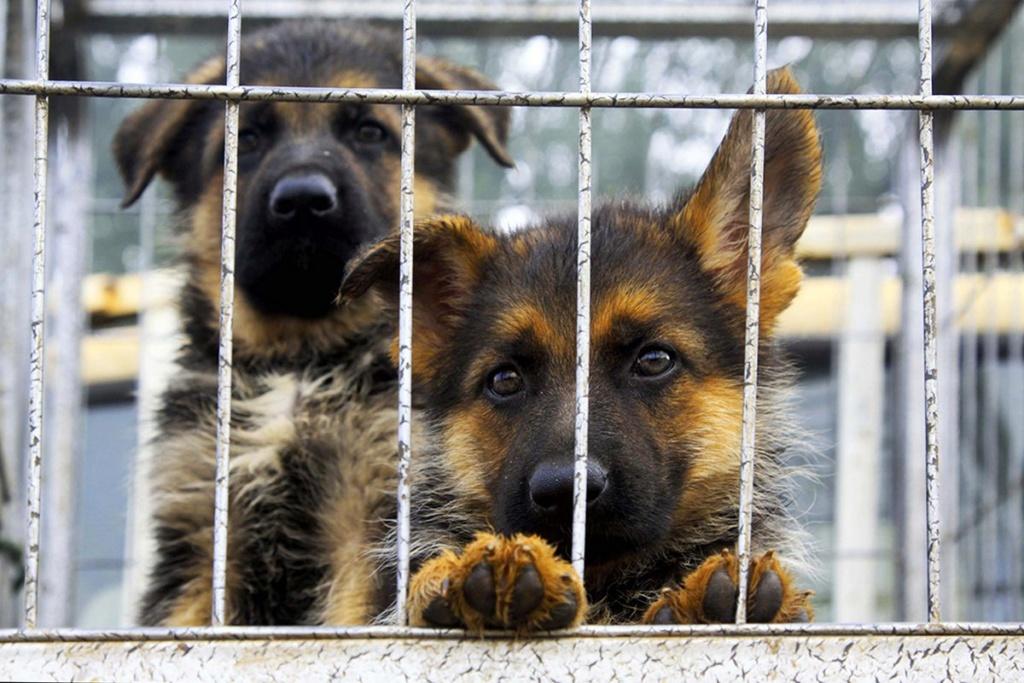 Secrets bien gardés de votre animalerie - Page 2 Animal31